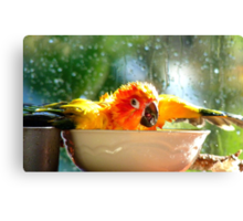 I'm Singing In The Rain..!!! - Sun Conure - NZ Canvas Print