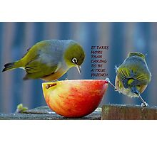 Friendship! - It Takes More Than Caring...Card - Silvereye - NZ Photographic Print