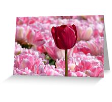 Oops... I Don't Think I Belong Here... - Tulip Plantation - NZ Greeting Card