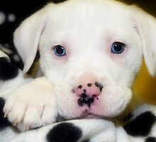 """""""Spots on Nose""""  Blue Eye Puppy by Peggy  Volunteer Photographer FOR RESCUE ANIMALS"""