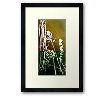 Mornington Peninsula Grasslands 6 Framed Print