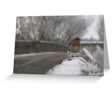 Robin Christmas Greeting Card