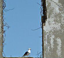 A Bird's Eye View by Karen Tregoning