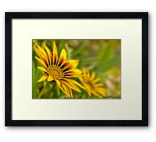 The colour of nature 01 Framed Print