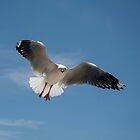 Seagull 3 by sharon2121
