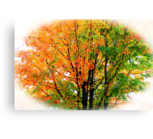 Leaves Changing Colors Canvas Print