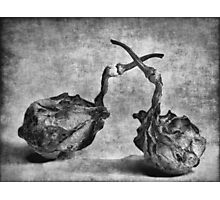 Old Gourds Monochrome image Photographic Print