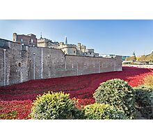 Tower Of London Poppies Photographic Print
