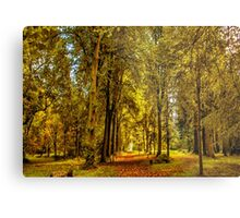 Woodland Pathway Metal Print