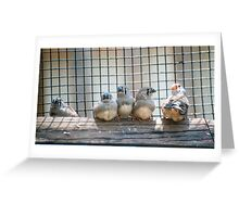 Finches  Greeting Card