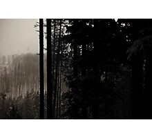 Winter, forest, mountains Photographic Print