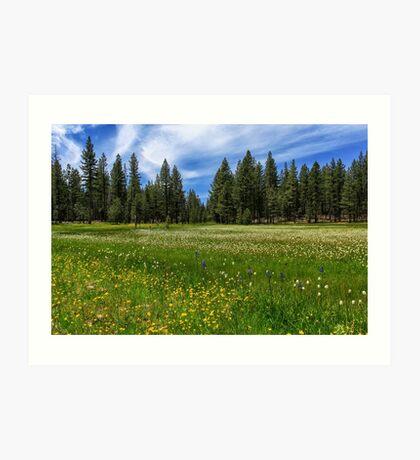 A Meadow In Lassen County Art Print