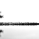 One Tree at Lake Annecy by Imi Koetz