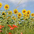 Sunflower and Poppy Field by Sheila Laurens