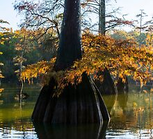 Cypress Tree Delight by darlayng52