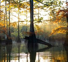 Cypress Trees basking in the Sunrise by darlayng52
