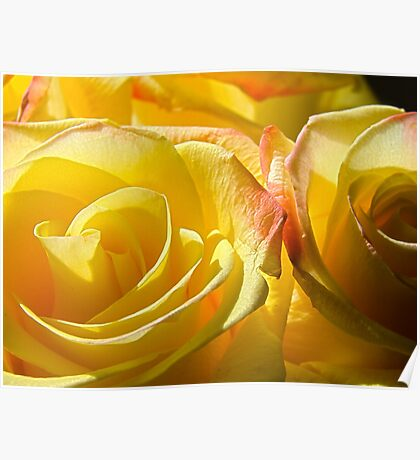 Bright yellow roses Poster