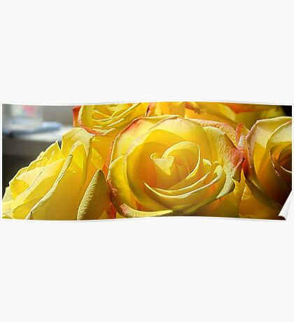 Bright yellow roses 3 Poster