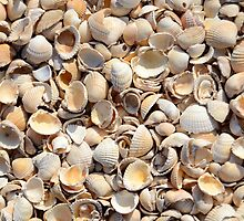 Background Of Beach Shells by mrdoomits