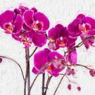 Purple Orchids by savage1