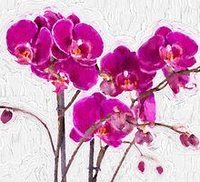Purple Orchids by Corina Daniela Obertas