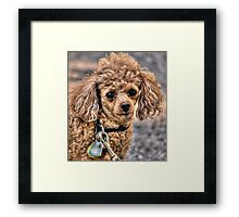 Smart eyes Framed Print