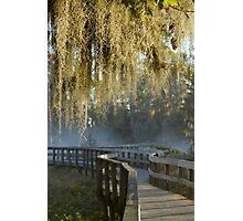 Spanish Moss Sunrise Photographic Print