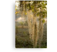 Spanish Moss Sunrise (II) Canvas Print