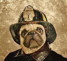 pug 14a by Adam Asar
