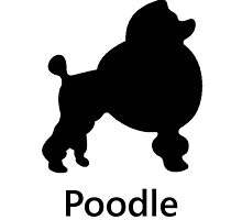 Poodle Silhouette by kwg2200