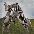 The Zebras Crossing !! by dunawori