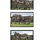 Fighting Zebras Triptych by dunawori