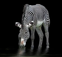 The Zebra and The Mill Pond by dunawori