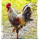 Rugged Rooster II by dunawori