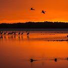 Arrival at dusk by Joe Saladino