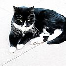 Black & white cat chillin' out by dunawori