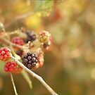 Blackberries by Matthew Folley