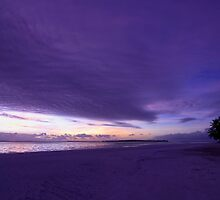 Purple Haze - Cocos (Keeling) Islands by Karen Willshaw