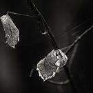 Winter Leaves by JeniNagy