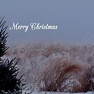 Merry Christmas #1 by WildThingPhotos