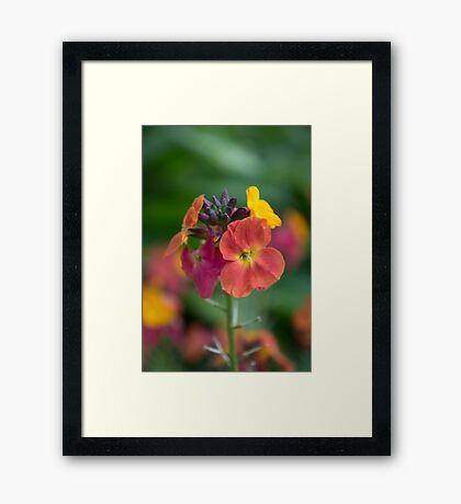 Colourful Framed Print
