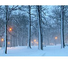 Winter evening in the park Photographic Print