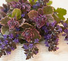 Bugleweed Blossoms  by Sandra Foster