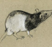 Rat by freeminds