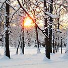 Winter Sunrise  by Alberto  DeJesus
