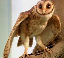 Australian Mask Owl by Sandra  Sengstock-Miller