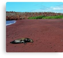 Sea Lion on Red Beach Canvas Print