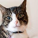 Cat 1 by Rebecca Cozart