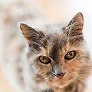 Cat 3 by Rebecca Cozart