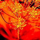 Dill in red by sonjas